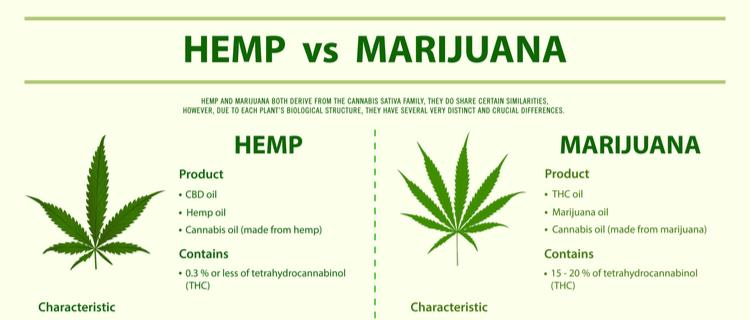 【保存版】大麻図鑑 種類や特徴、効果について紹介