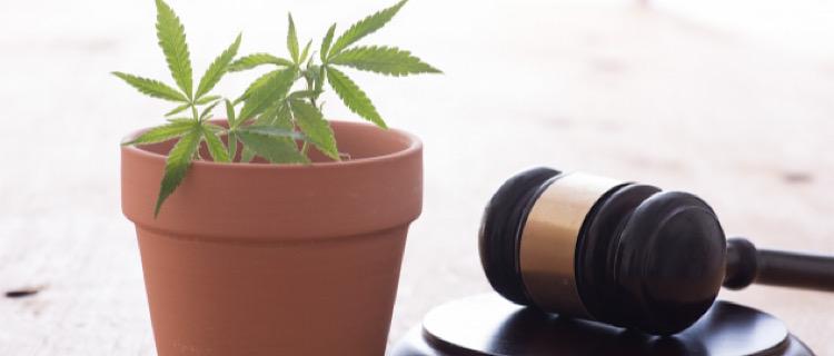 【大麻合法化の世界的な流れ】合法国の紹介|いずれ日本も?