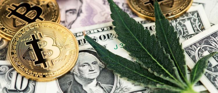 米国市場で注目の大麻関連株とは?日本で買える5つの銘柄を紹介!