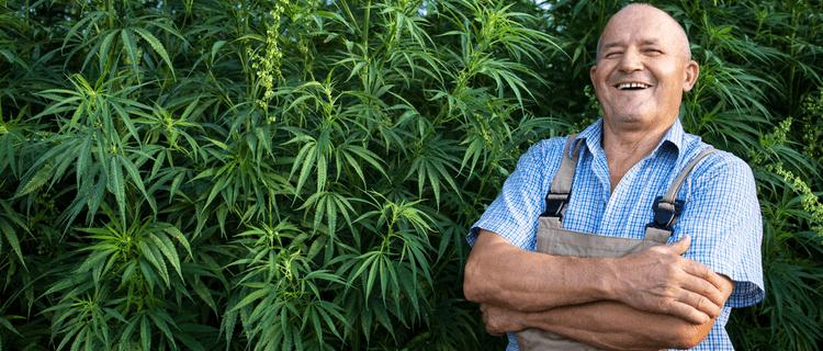 大麻農家の年収はいくら?日本と海外の大麻産業の違いも解説