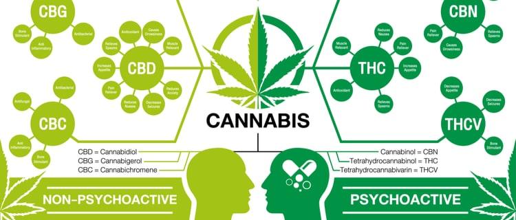 大麻を摂取すると何が起こる?