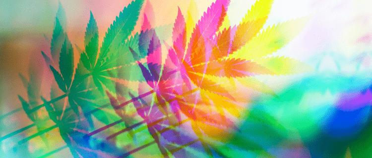 大麻の種類4選!インディカやサティバ、ハイブリッドなど