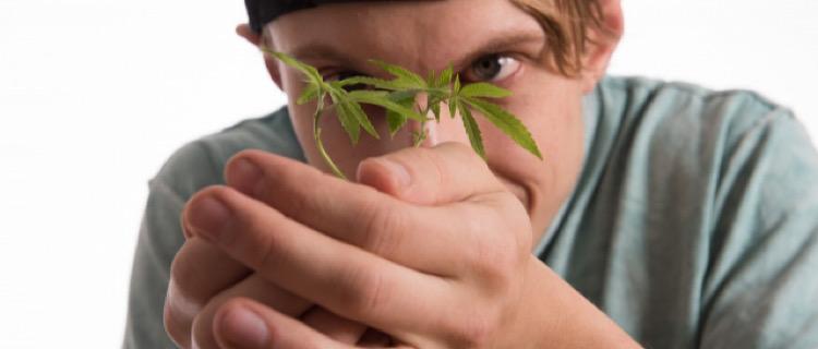 世界中で大麻が合法化されている