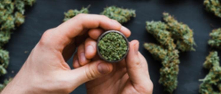 ダン・ビルツァーアンが大麻の会社を設立!