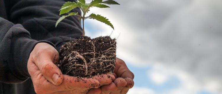 大麻栽培のメリット3選