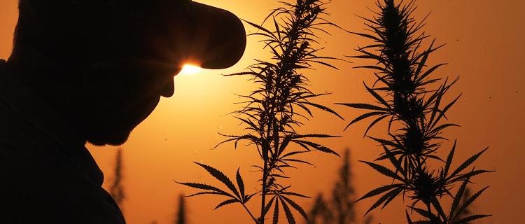 まとめ:世界的に大麻合法化の流れ!日本で解禁される日は少し遠いかも...