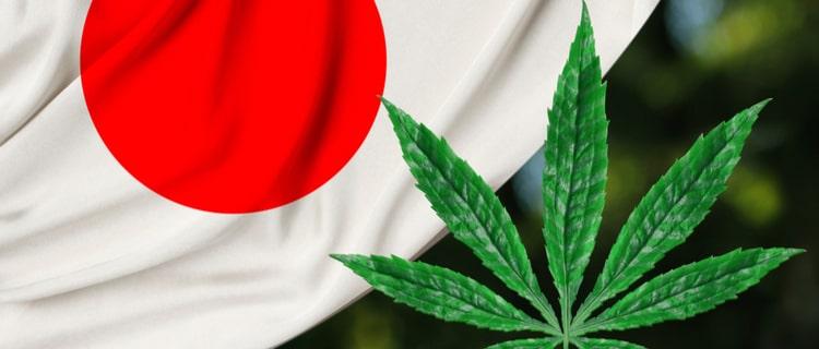 【徹底解説】日本の大麻取締法がわかる|歴史や実情を解説!