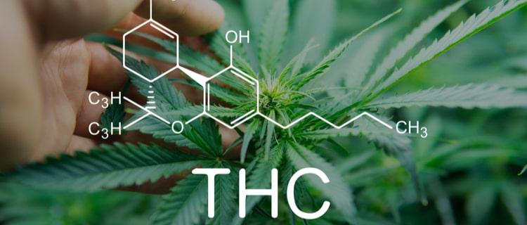 まとめ:THCを含む植物は大麻しかない