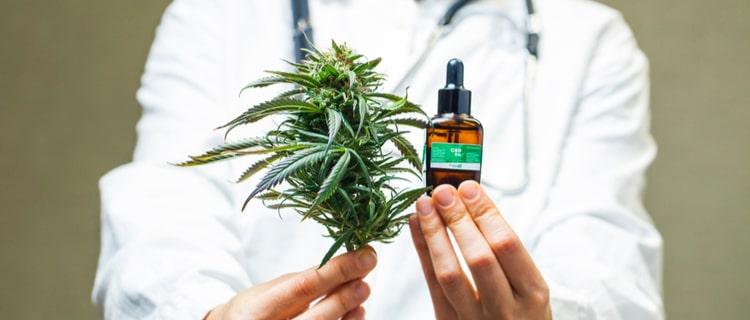 まとめ:大麻の使用方法は見直されており合法の国が増えている