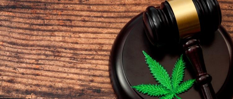 """""""大麻取締法""""が制定されたのは1948年"""