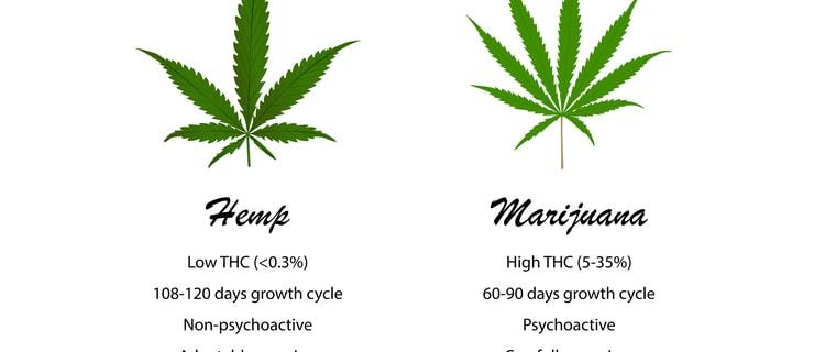 大麻が運転に与える影響