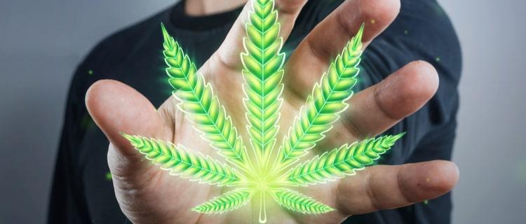 2020年WHOが大麻の危険性を見直す