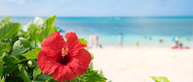 沖縄では大麻による摘発が急増
