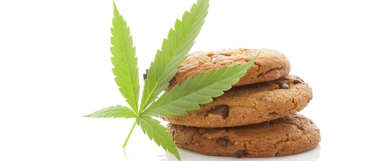 【徹底解説】ガールスカウトクッキーとは?THC含有量が高いハイブリット種