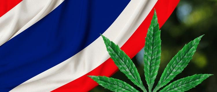 【タイで医療大麻解禁!】現地の医療大麻事情や大麻クリニックを紹介!