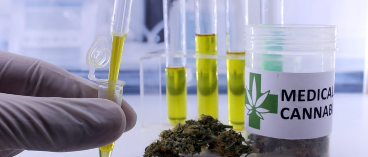 韓国で医療大麻が解禁され2020年から導入開始