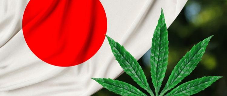 「神童」は日本発の大麻品種