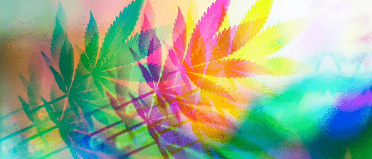 医療大麻とは?