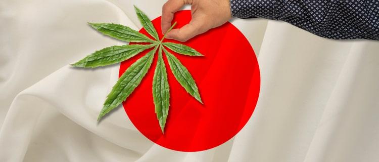 日本での大麻解禁はいつ?合法化する日は来る?