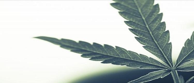 大麻の成分THCは日本で合法?事実上違法となる