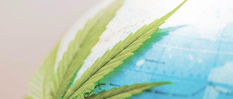 アジアで医療大麻が合法化されている国は2国のみ