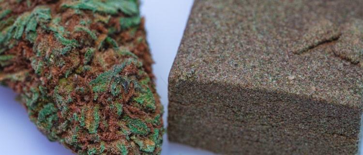 大麻の花の部分から落ちた樹液は「ハシシ」と呼ばれている