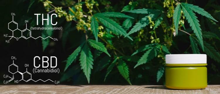 まとめ:THC成分入り大麻製品は日本で違法!大麻製品を購入する時は注意
