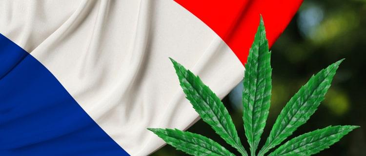 まとめ:大麻大国フランスでも大麻規制緩和の流れがある