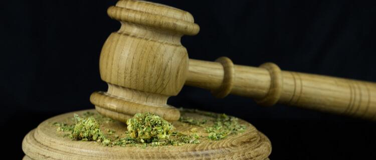日本での大麻合法化をめぐる動き