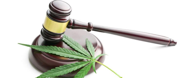 まとめ:大麻を合法化するメリットは存在する