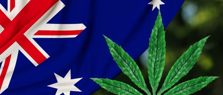 まとめ:オーストラリアでは大麻の少量の所持・栽培は合法!