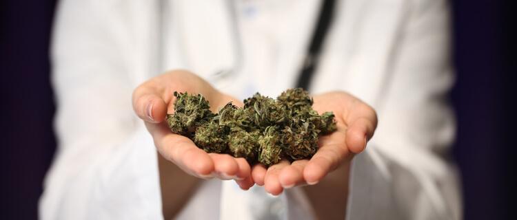 まとめ:大麻の合法化が海外で進む背景を理解しよう