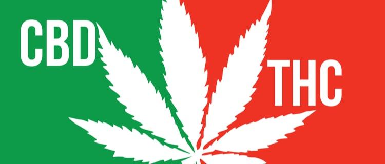 まとめ:THCとCBDの違いを理解し、THCを所持しないように注意!