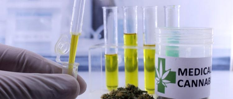 まとめ:医療大麻は癌に有効!これからの研究にも期待されている