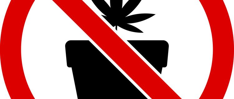 まとめ:ロサンゼルスで大麻は合法だが吸う場所に注意