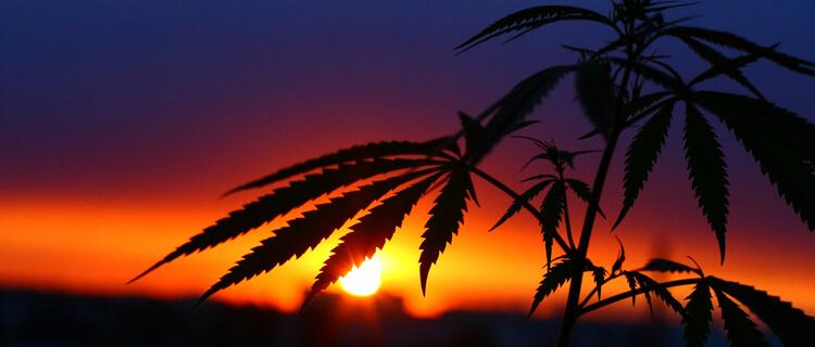 まとめ:オランダは大麻に対して寛容政策を取っている国