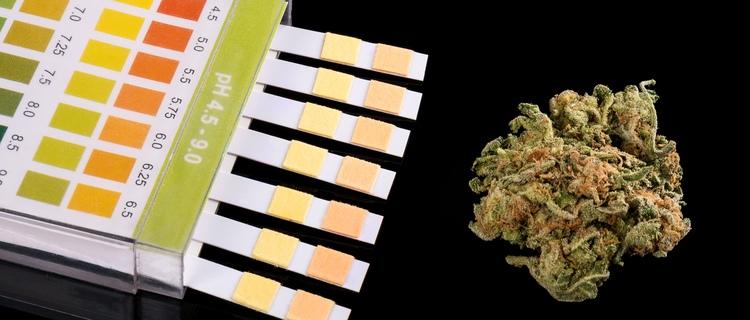 大麻の検査方法と残存期間について徹底解説!陽性の時に通報される可能性は?