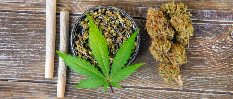 大麻の葉とバッズ