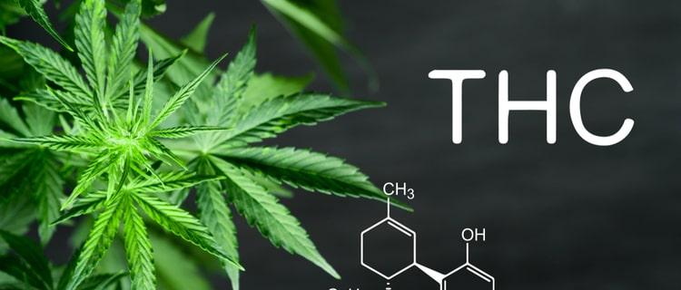 大麻とTHCの化学式