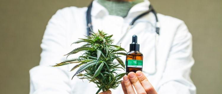 大麻の成分により人間の代謝機能は促進される