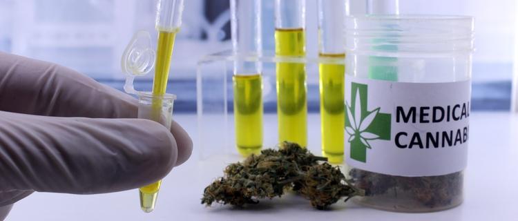 大麻の検査はどの成分に反応すると陽性と判定されるのか?