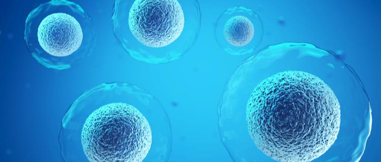 卵子の発育を阻害する