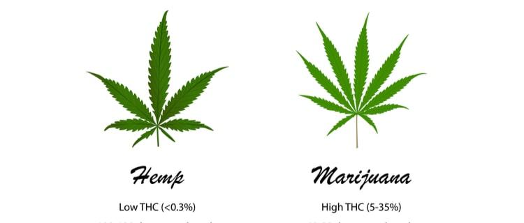 【徹底解説】産業用大麻って普通の大麻と何が違う?大麻との違いや様々な使い道を紹介