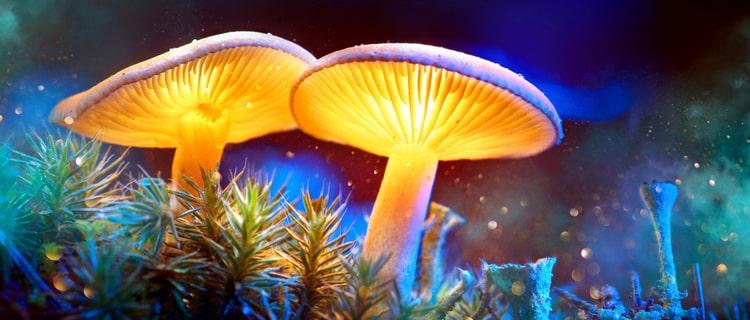 マジックマッシュルームは強力な幻覚剤の1つ!成分や危険性を解説