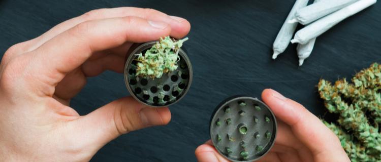 グラインダーで大麻を擦り潰す