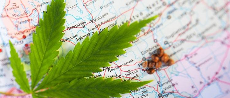 世界地図と大麻の葉