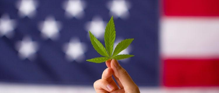 大麻の合法化が進んでいる?北米の現状