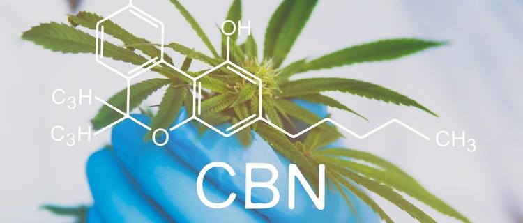 カンナビノールと他の大麻成分の違い|独自の効果がある!