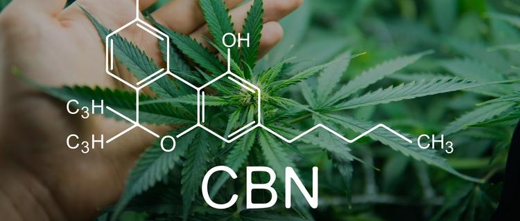【徹底解説】カンナビノール(CBN)の効果とは?|CBNとCBDとの違いも調査!