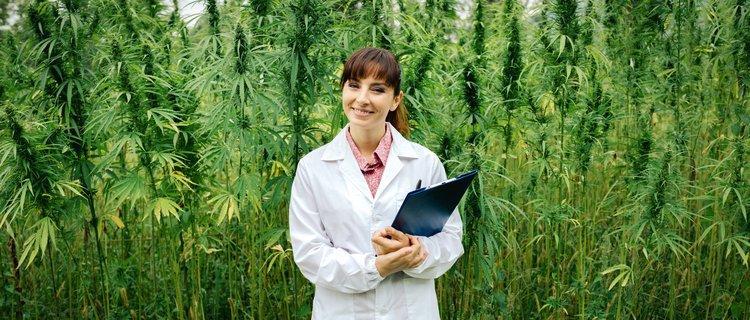 まとめ:カンナビノール(CBN)はTHCやCBDと並ぶ大麻草の主成分